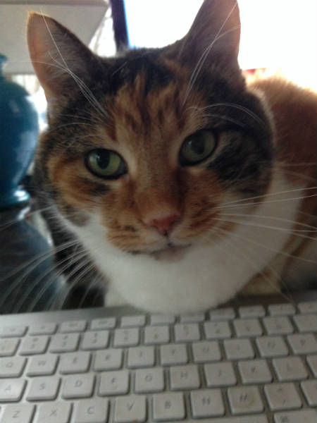 cat at keyboard photo